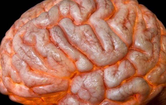 Hersenschade signaleren met bloedtest