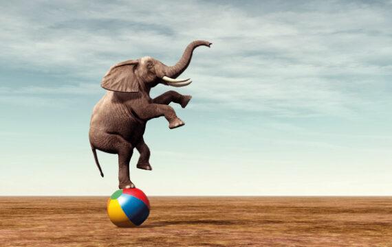 Olifanten laten dansen