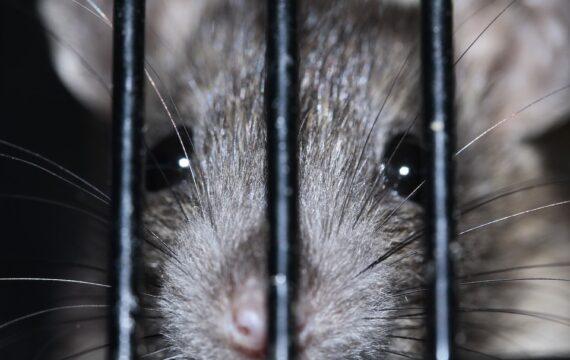 Online platform over dierproeven al langer beschikbaar