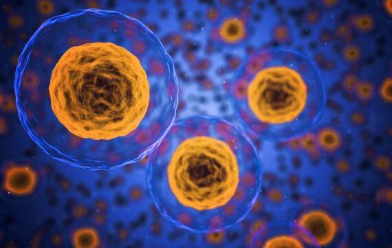 Nieuwe nano-immuuntherapie tegen levenslang medicatie na orgaantransplantatie