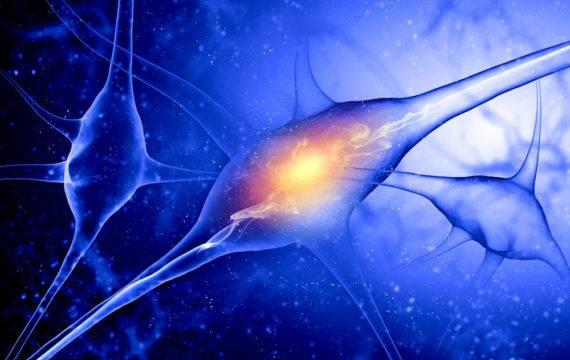 Kunstmatige synaps kan met levende cellen communiceren