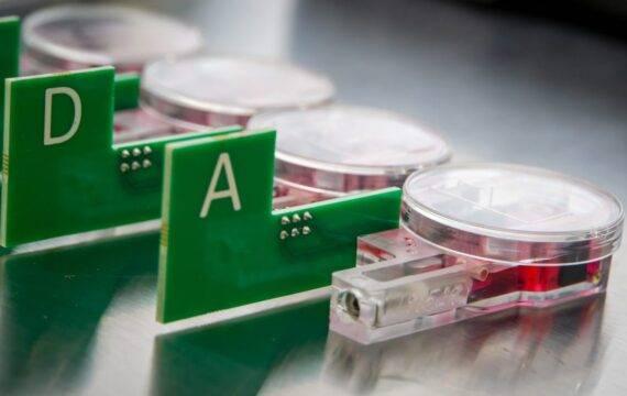 'Rest' hartweefsel kan blijven kloppen in Erasmus MC lab