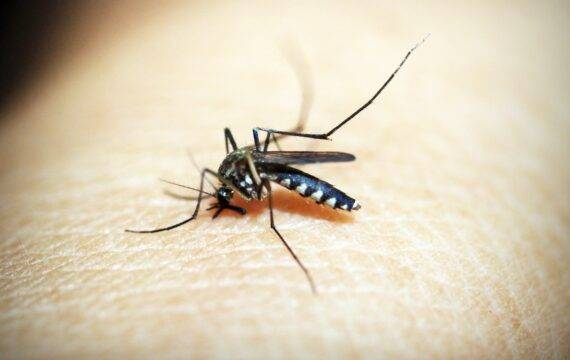 AI-technologie voor bestrijden ziektes door muggenbeten