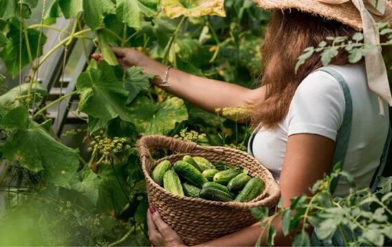 Wieden, zaaien, oogsten: hoe succesvol te proeftuinieren